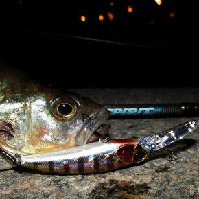 Вечер мелкой рыбы 07.09