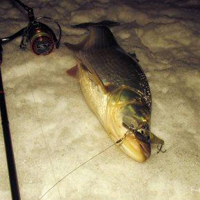 Рыбалка в центре Москвы 06.02.19